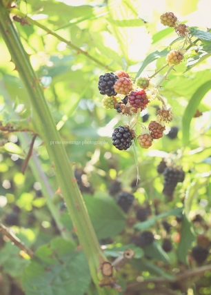 blackberry 01